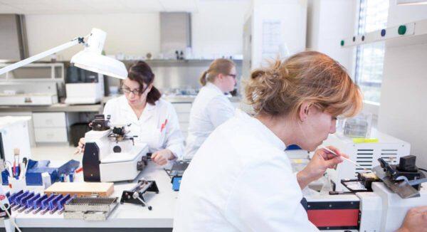 Arbeiten im Institut für Pathologie